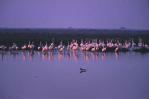 festival fotografia naturalistica