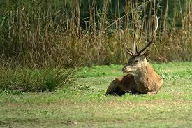 sulle tracce del cervo